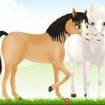 Equidan-ein-Pferdespiel-fur-Pferdenarren